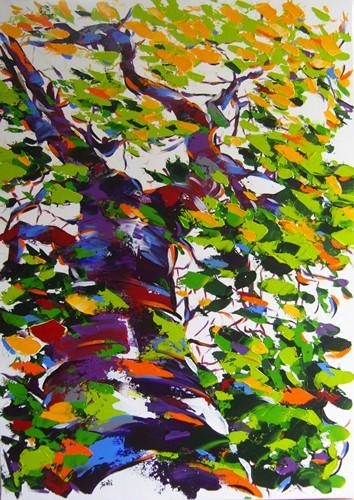 Acerifolia   70x50    Dispo